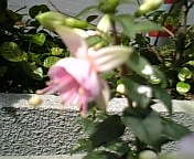 20070512_0046
