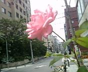 20070617_0013