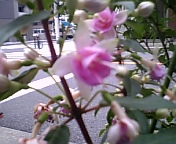 20070617_0026